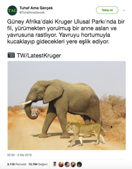 207d2-kruger-ulusal-park25c425b1-fil-aslan