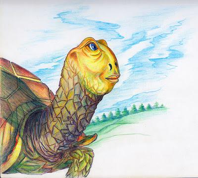 3da94-story-adventures-of-a-magic-turtle-4