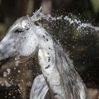 İntihar Eden Atlar